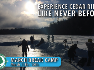 Protected: March Break Camp